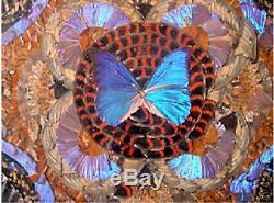 A Vintage Real Butterfly Serving Tray. Made in Rio de Janeiro 1900s 1940s