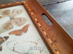 Antique Inlaid wood Blue Brazil Butterfly Wing Large Serving Tray 1930s 20x13