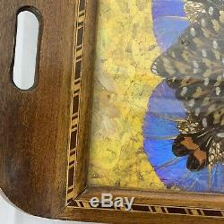 Antique Iridescent Butterfly Wing Serving Tray Wall Hanging Inlaid Wood Frame