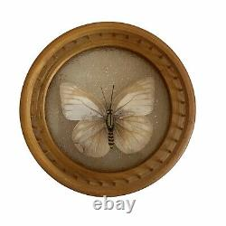 Mid Century Glass & Wood Butterfly Tray & 6 Matching Coasters Taxidermy