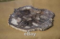 Petrified Wood Stone Platter Cocktail Tray AppetizerCheese Tray Home Decor