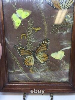 Vintage Butterfly Insect Serving Tray Drink Apps Presentation Entomologist