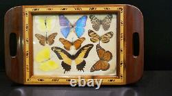 Vintage Real Butterfly Specimen Taxidermy Inlaid Wood Serving Tray Swallowtail